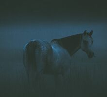 Misty Evening by Betty MacRae