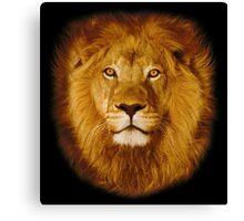 Lion at sunset Canvas Print