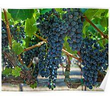 Grapes 2 Poster