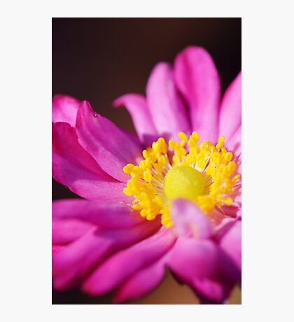 Morning Flower: Macro Photography Photographic Print