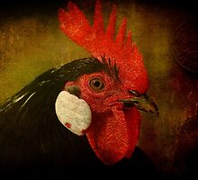 Rocky Rooster by Clare Colins