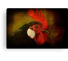 Rocky Rooster Canvas Print