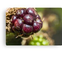 Blackberry Fruit Metal Print