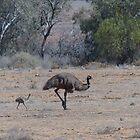 Emu family by watchthebirdie