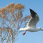 Beautiful Australian Seagull. Exclusive Photo Art. by sunnypicsoz