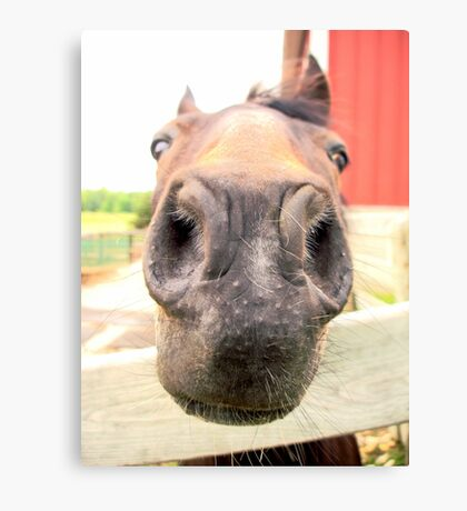 Sweet Rescue Horse Canvas Print