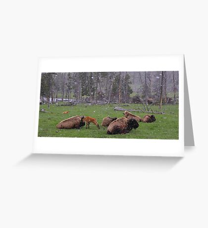 Momma Greeting Card