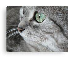 Cat I. Canvas Print