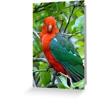 Australian Native King Parrot Greeting Card
