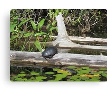 Turtle Sunning Itself on a Log Canvas Print