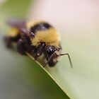 A Bee a Crawlin' by Doug Cargill