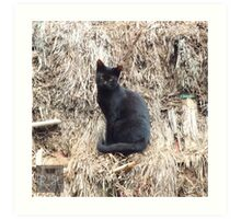 Cat on a Nipa Hut Art Print