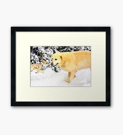 Are you lost? Framed Print
