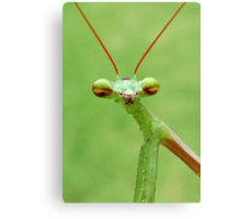 Praying Mantis Canvas Print