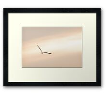 Seagull Tranquility Framed Print
