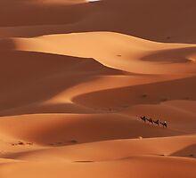Caravan across the Sahara Desert by Georgina Steytler