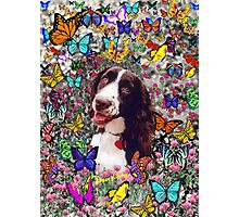 Lady in Butterflies - Brittany Spaniel Photographic Print