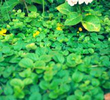 Hortensia inside shrubs Sticker
