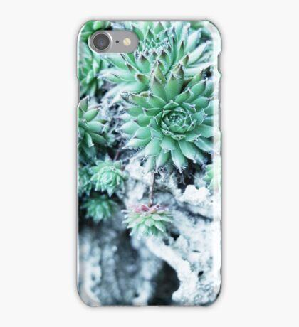 Echeveria at a stone iPhone Case/Skin