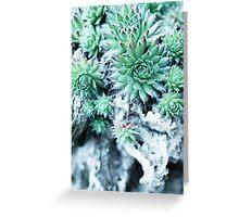 Echeveria at a stone Greeting Card