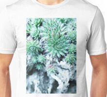 Echeveria at a stone Unisex T-Shirt