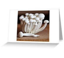 Shimeji mushrooms, hypsizygus tessellatus Greeting Card