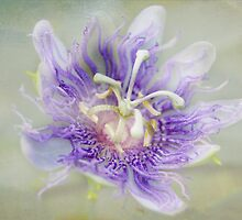 Passion Flower by designingjudy
