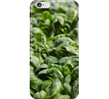 Spinach ready for harvest iPhone Case/Skin