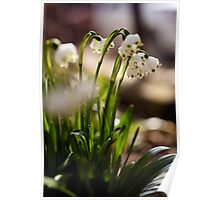 Snowdrop flowers in the forest Poster