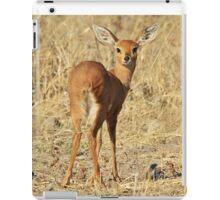 Steenbok - Shy and Elusive Beauty - Cute African Wildlife iPad Case/Skin