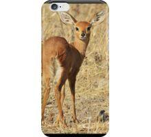 Steenbok - Shy and Elusive Beauty - Cute African Wildlife iPhone Case/Skin