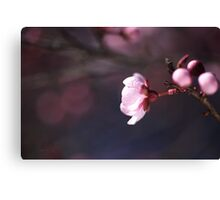 Blossom Days Canvas Print