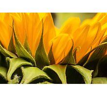 zonnebloem macro Photographic Print
