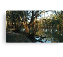 Dusk Vinifera State Forest, Vinifera Victoria Canvas Print