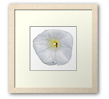 white flower and insect  Framed Print