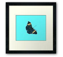 Butterfly on Blue Framed Print