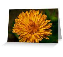 Calendula marigold Greeting Card
