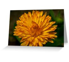 Calendula marigold Greeting Card
