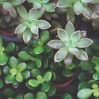 Garden Green Succulents by Debbra Obertanec