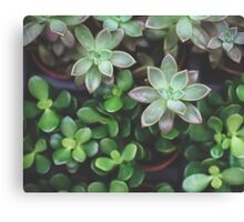 Garden Green Succulents Canvas Print