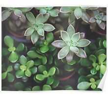 Garden Green Succulents Poster