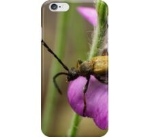 long horn beetle on pink flower iPhone Case/Skin