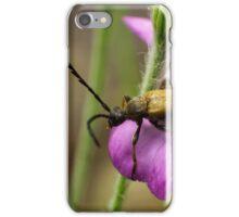 long horn beetle on pink flower iPhone Case/Skin