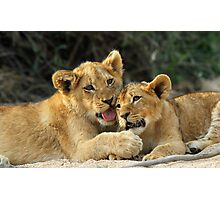 Cuddly cubs Photographic Print