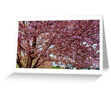 Springtime in Virginia  ^ Greeting Card