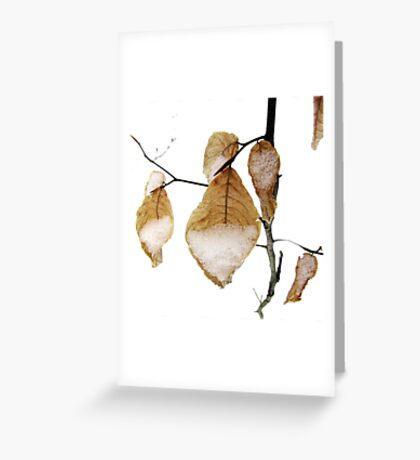 Beech Tree Leaves in Snow Greeting Card