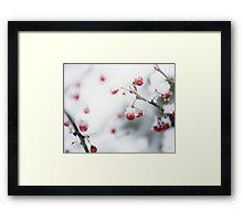 Winter Red Berries Framed Print
