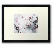 Winter Red Berries Framed Print