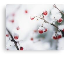 Winter Red Berries Canvas Print