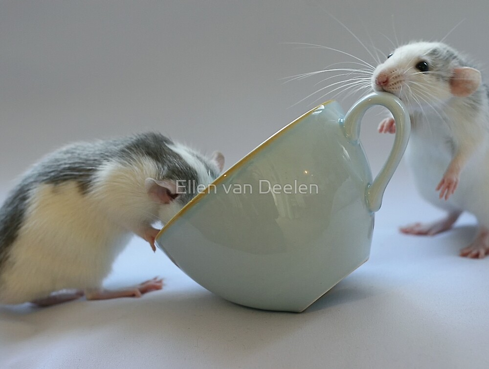 Coffee-time by Ellen van Deelen